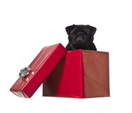 Dog in a gift box Royalty Free Stock Photography