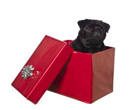 Dog in a gift box Stock Image