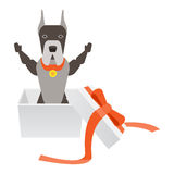 Dog in gift box Stock Photos