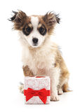 Dog with a gift. Royalty Free Stock Photos