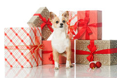 Dog with gifts Stock Photo