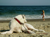 Dog and girl at the beach. Dog watching over girl at the beach Royalty Free Stock Photography