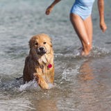 Dog and girl come out of the sea Stock Images