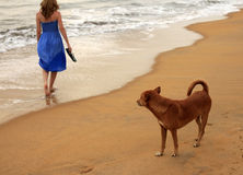 Dog and girl Stock Images