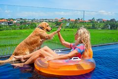 Dog give high five to happy girl swimming in pool. Funny golden labrador retriever give high five to happy girl swimming in pool. Fun with friends at pool party Royalty Free Stock Photo