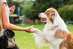 Dog gives a girl the paw Stock Images