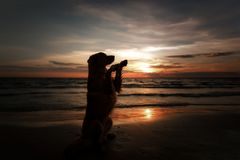 The dog gives his paw. A pet on the sea, a vacation and a healthy lifestyle Royalty Free Stock Photo