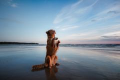 The dog gives his paw. A pet on the sea, a vacation and a healthy lifestyle Stock Image