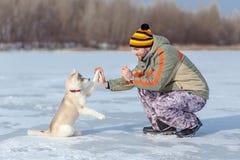 Dog gives paw Royalty Free Stock Image