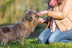 Dog gives a woman the paw. And gets a treat Royalty Free Stock Photos