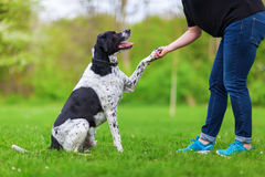 Dog gives a woman the paw Royalty Free Stock Images