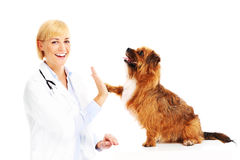 Dog giving high five to a vet Stock Photos