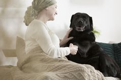 Dog giving paw sick woman. Dog giving paw to sick woman with cancer while sitting together on sofa at home Stock Images