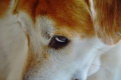 Dog glance feeling be shy Stock Photo