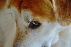 Dog glance feeling be shy. A dog glance feeling be shy Stock Photo