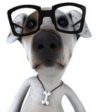 Dog with glasses Stock Photography