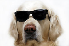 Dog in glasses Stock Photo
