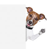 Dog banner. Dog  with glasses behind a white banner waving Royalty Free Stock Image