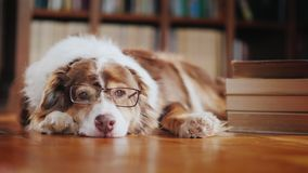 A dog in glasses is dozing about a pile of books on the floor in the library