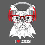 Dog in glasses and headphones. Vector illustration. Royalty Free Stock Image