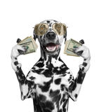 Dog in glasses holds in its paws a lot of money. The dog in glasses holds in its paws a lot of money Royalty Free Stock Photos