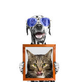 Dog in glasses holds a portrait of cat in its paws. Isolate on white background royalty free stock photo