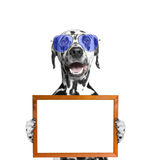 Dog in glasses keeps frame in its paws. Isolate on white background royalty free stock photos
