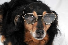 Dog and Glasses Stock Photography