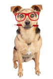 Dog Glasses Pencil Red Looking Portrait Isolated stock photography
