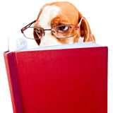 Dog in glasses Royalty Free Stock Photography