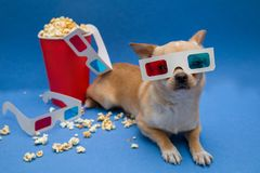 The dog with the glasses to view the stereo movies royalty free stock photo
