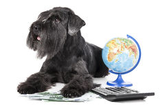 Dog with a globe Stock Image