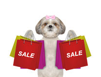 Dog goes shopping and sales. Isolated on white royalty free stock images