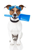 Dog with goggles and a shovel Stock Photos