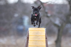 Dog is going over the bridge. Dog during agility sport is going over the bridge. and he is quite happy Stock Photos