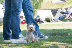 The dog going with owner. In clear summer day Royalty Free Stock Photography