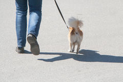 The dog going with owner Royalty Free Stock Photo