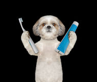 Dog is going to clean the teeth Stock Image