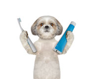 Dog is going to clean the teeth Royalty Free Stock Photos