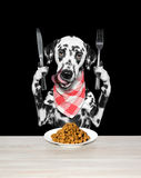 Dog is going to eat dried pet food Stock Photography