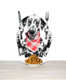 Dog is going to eat dried pet food Royalty Free Stock Photos