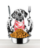 Dog going to eat and hold knife and fork Stock Images