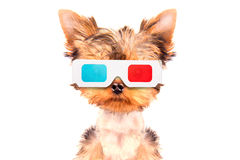 Dog going to the movies Stock Images