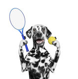 Dog is going to play tennis Stock Photos