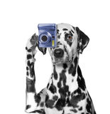 The dog is going to take pictures of something. He is photographer stock photos