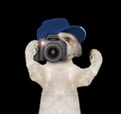 Dog is going to take pictures during the trip Stock Photos