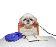Dog is going to talk over the telephone Stock Photos