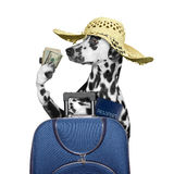 Dog is going on a trip to travel with a suitcase Stock Photo