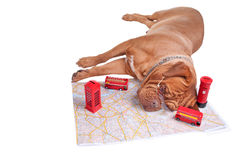 Dog going on vacation Royalty Free Stock Photos