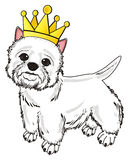 Dog in golden crown Royalty Free Stock Photo